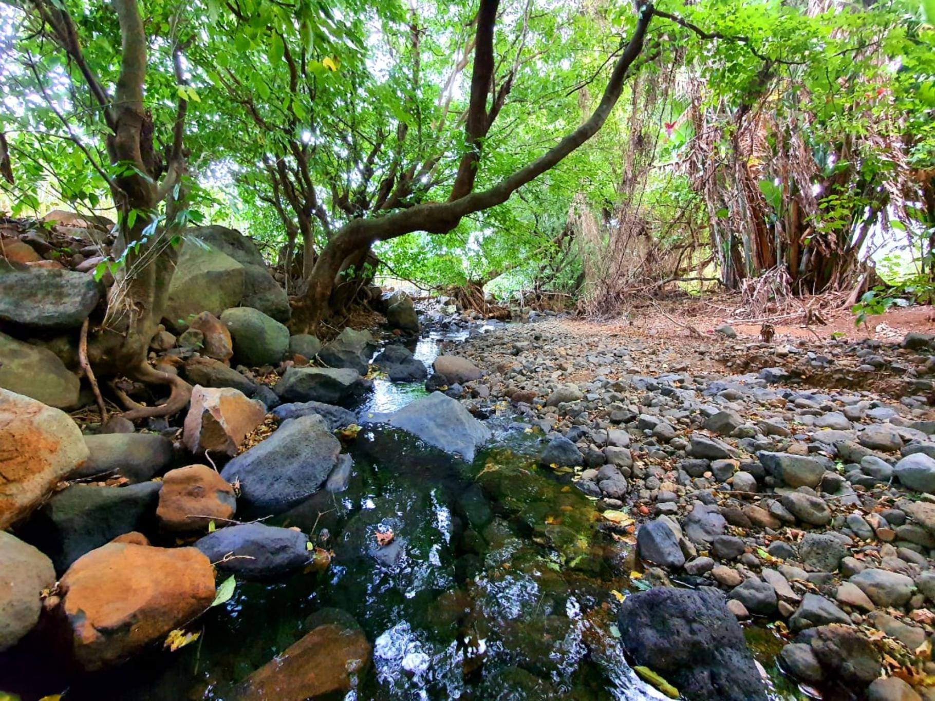 A vendre – Magnifique terrain agricole de 5 arpents 26 se situe en bordure de de rivière à Anse Jonchée.