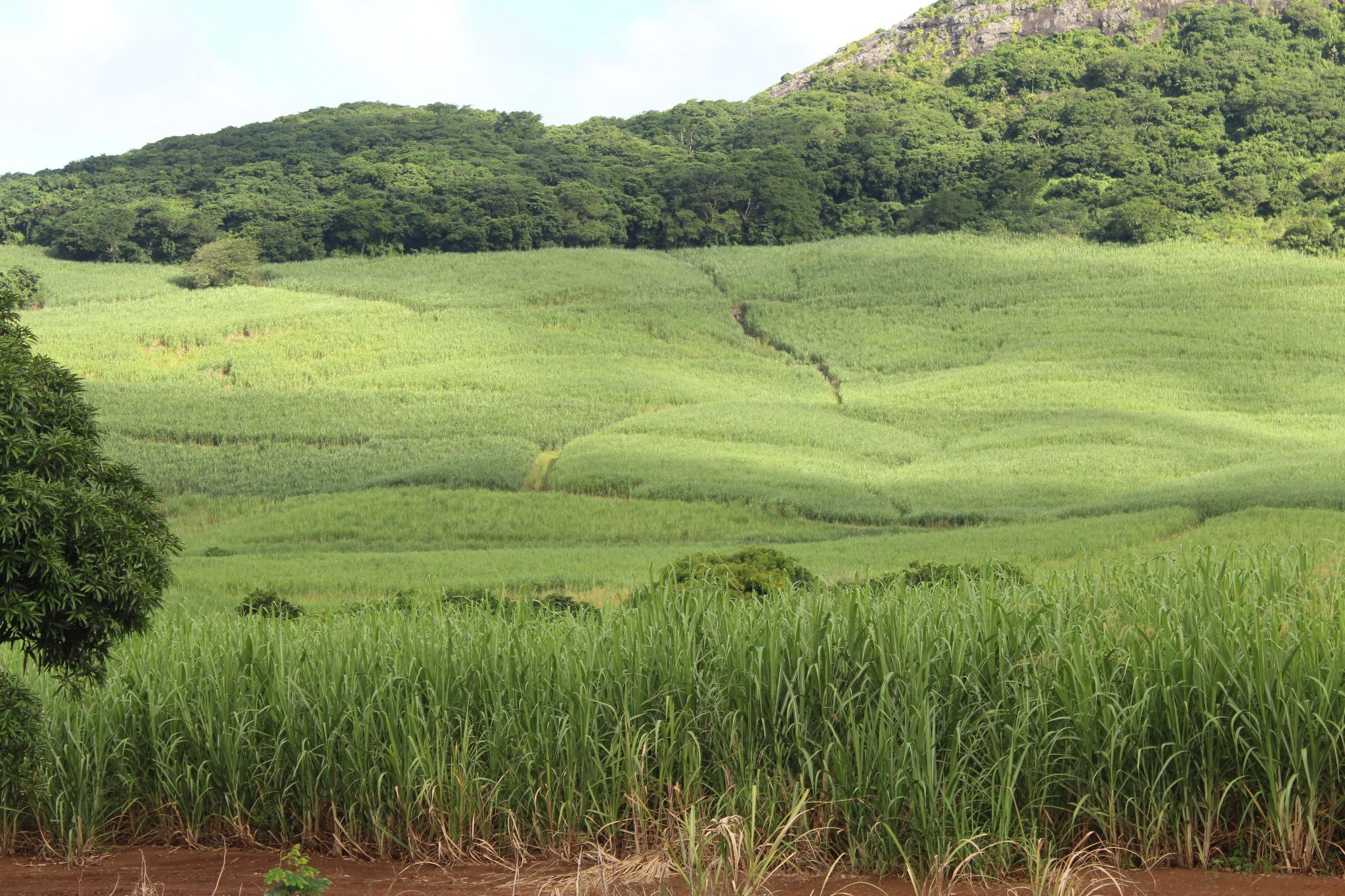 FOR SALE – Beautiful agricultural land of 19 acres 90 situated in Anse Jonchée.