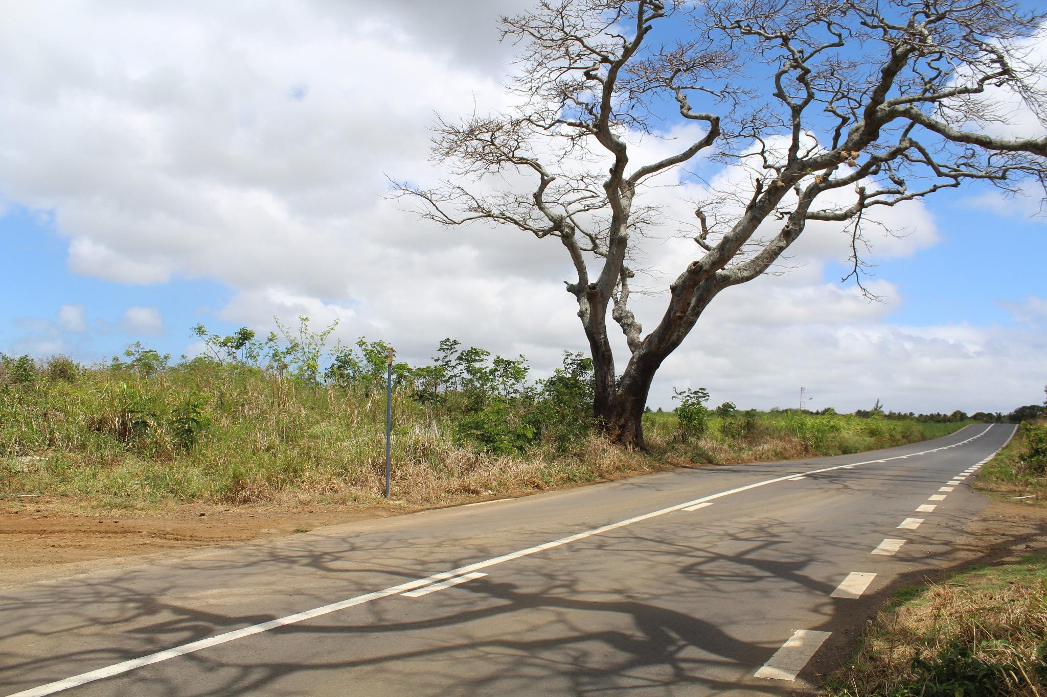 FOR SALE – Agricultural land of 1055 toises on the main road in La Salette, Grand Bay.