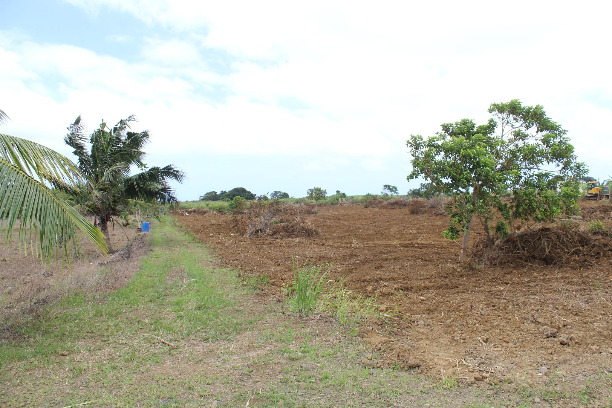 FOR SALE – Agricultural plot of land of 3 acres 07 in Gros Bois.