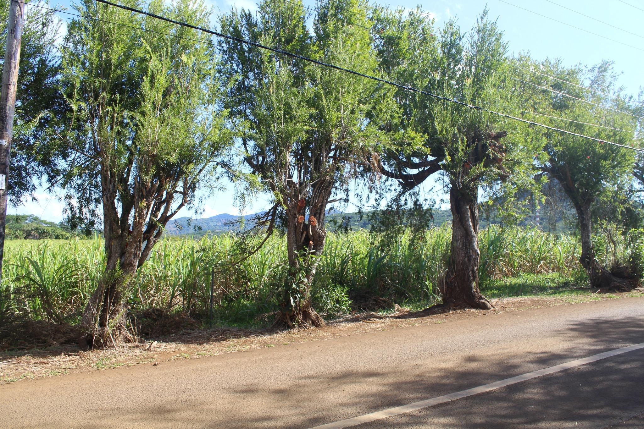 A VENDRE – Magnifique terrain agricole de 4 arpents 78 à Chamarel avec vue sur la montagne.