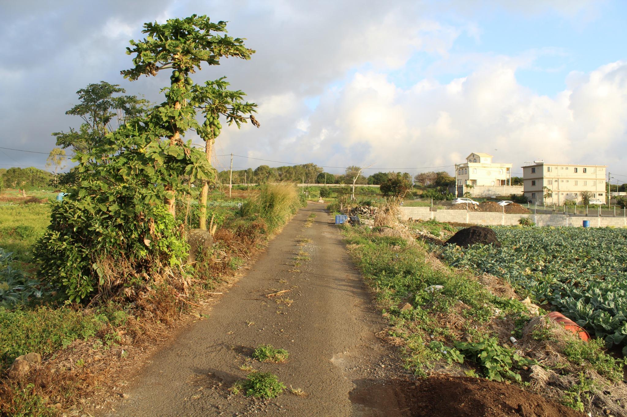 A VENDRE – Très beau terrain en toute propriété de 786 toises à Vacoas.