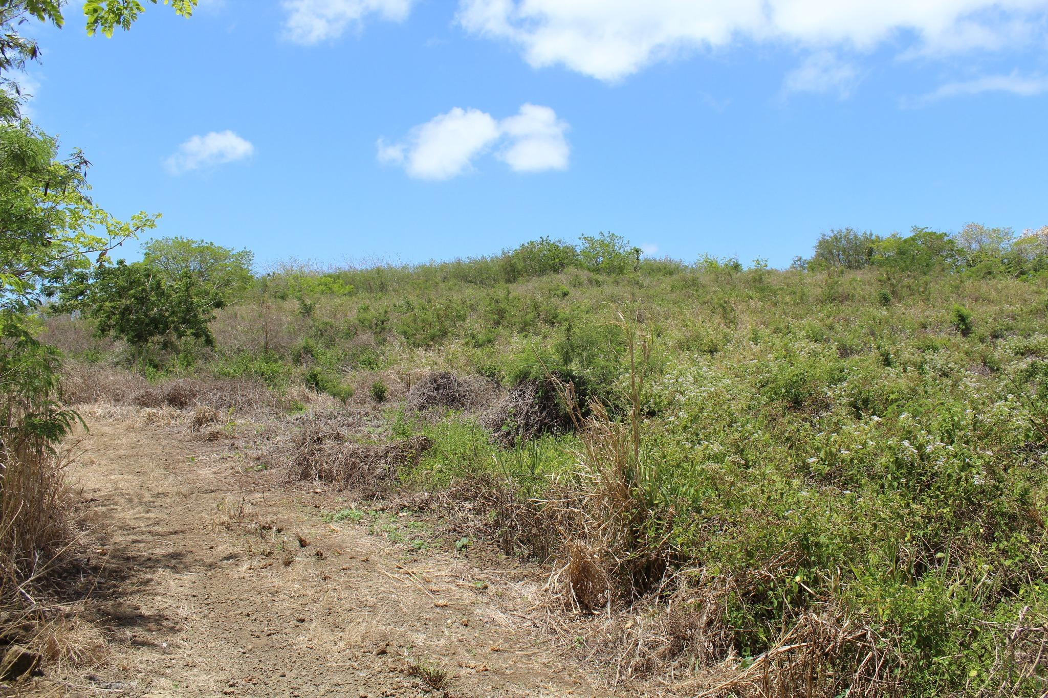 FOR SALE – Agricultural plot of land of 3 acres in Salette in Grand Bay.