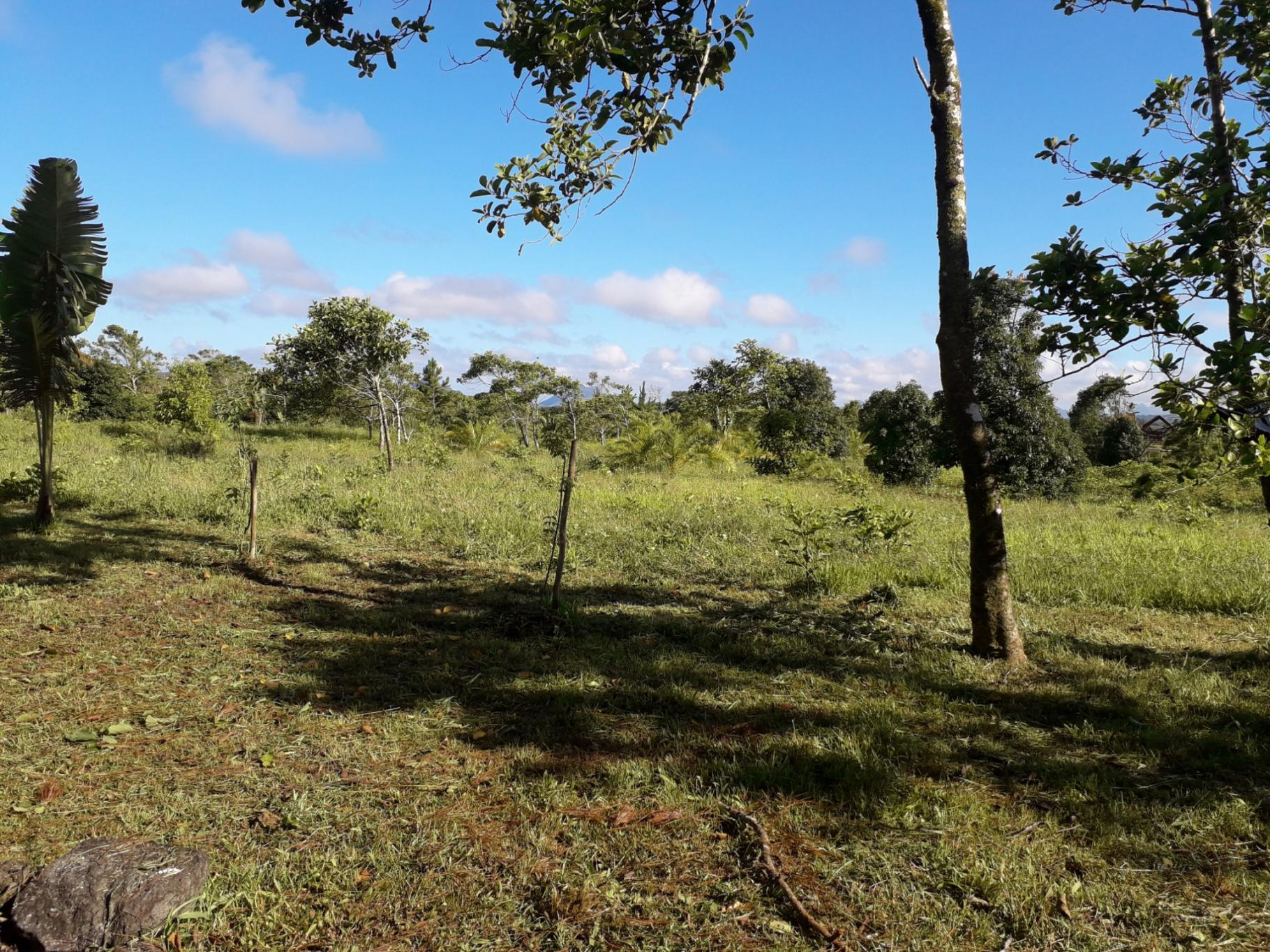 FOR SALE – Beautiful agricultural land of 10 acres 16 in Mare Longue.