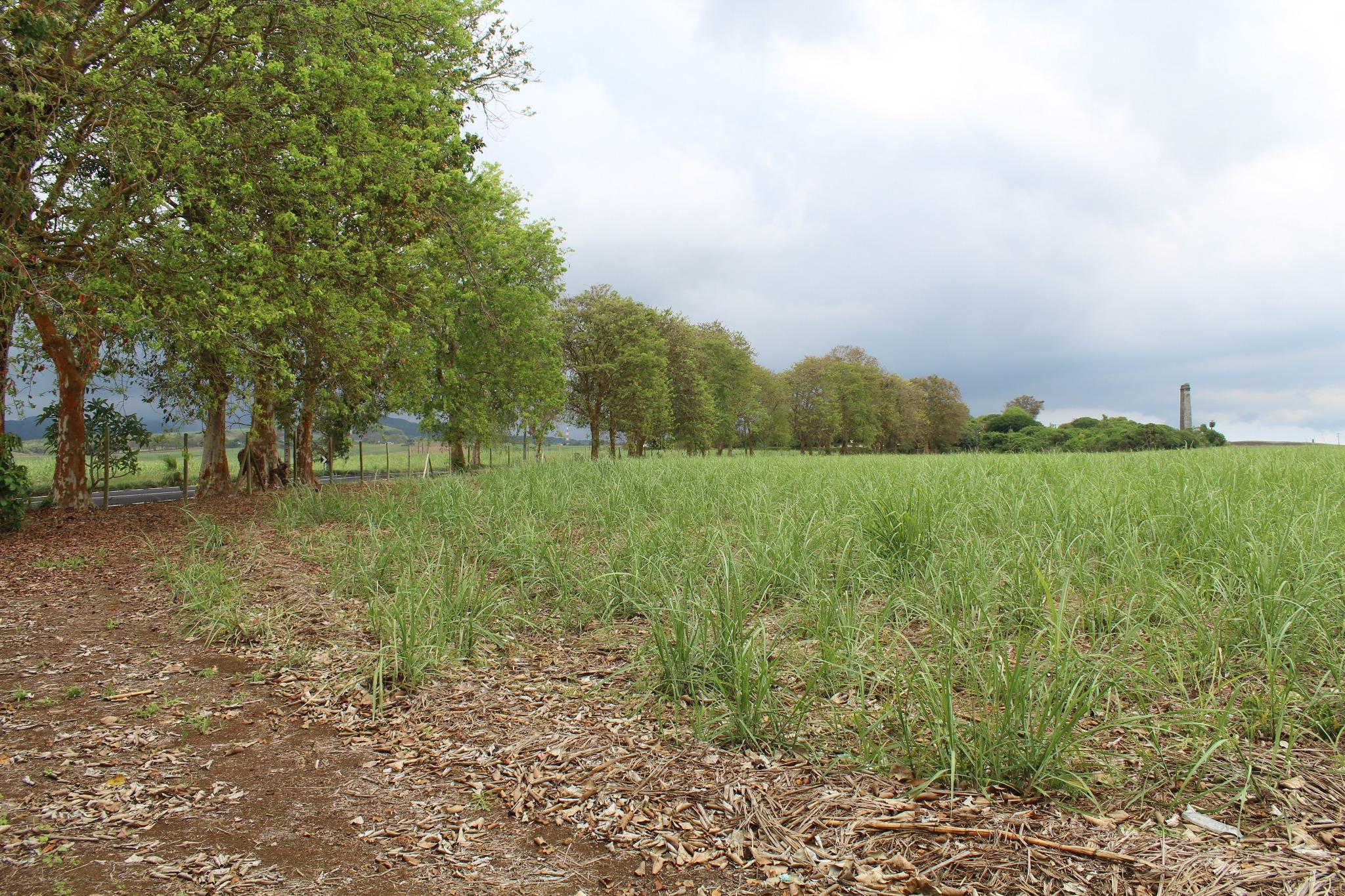 FOR SALE – Agricultural land of 4 acres on the main road in Petite Julie.